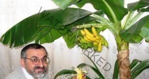 Банан - как да отглеждаме това тропическо растение у дома!