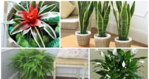 12 стайни растения, които могат да оцелеят дори в най-тъмния ъгъл