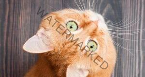 Котката – индикатор за вашата карма и благополучие
