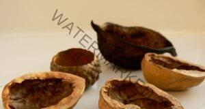 Тинктура от преградните стени на орехите: Оказва се много полезна!