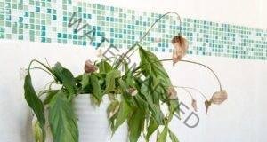 Как да съживите болното си растение? Незаменими съвети!