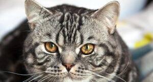 Ето как котката може да ви излекува! Интересни факти!
