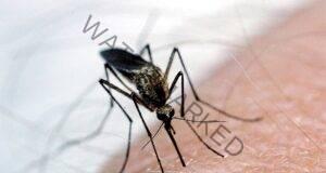 Комарите ще избягат сами от вас, ако използвате това!