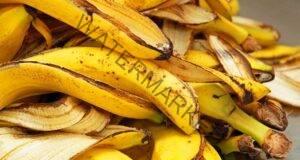 Банановата кора е най-ефективната тор за стайните растения!