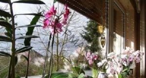 Ето как да имате изобилие от орхидеи на перваза на прозореца!