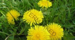 Инфузия срещу инсулт от растение, което го има във всяка градина!