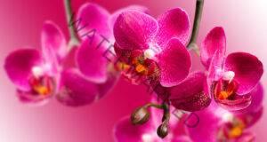 Орхидеята ви ще умре заради тези грешки. Никога не правете това!