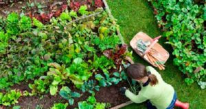 Полезни трикове за красива градина, които всеки трябва да знае!