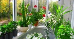 Разкошна цветна градина в апартамента! Запомнете тези тайни!