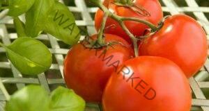 Как да отгледаме домати през май без оранжерия и без разсад