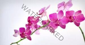 Магическото значение на орхидеята в дома ви. Какво привлича тя?