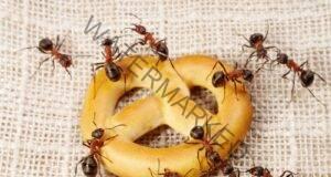Отървете се от мравките у дома с тези ефективни начини!