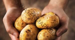 Приложения на картофите, за които не сте имали представа