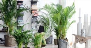 Тези 6 растения ще ви помогнат да охладите дома си!