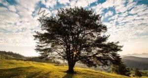 Ще кажем най-важното за вас, след като си изберете едно дърво!