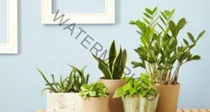 5 начина да поливате стайните растения, докато сте на почивка
