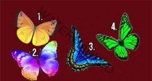 Изберете пеперудата, която ви харесва и преоткрийте себе си!