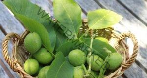 Мехлем от зелени орехи: Чуден лек за много болести!