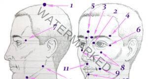 13 биологично активни точки за справяне с всяка житейска ситуация