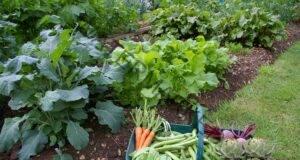 Защитете градината си от вредители! Ето какво трябва да знаете!