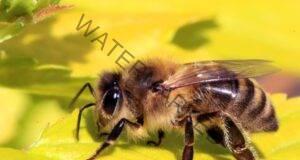 Притчата за пчелата и мухата за тези, които обвиняват другите