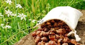 Свойствата на тези орехи определено ще ви изненадат!