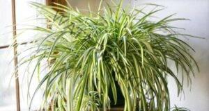 За здрав сън си вземете едно от тези 6 растения в спалнята!