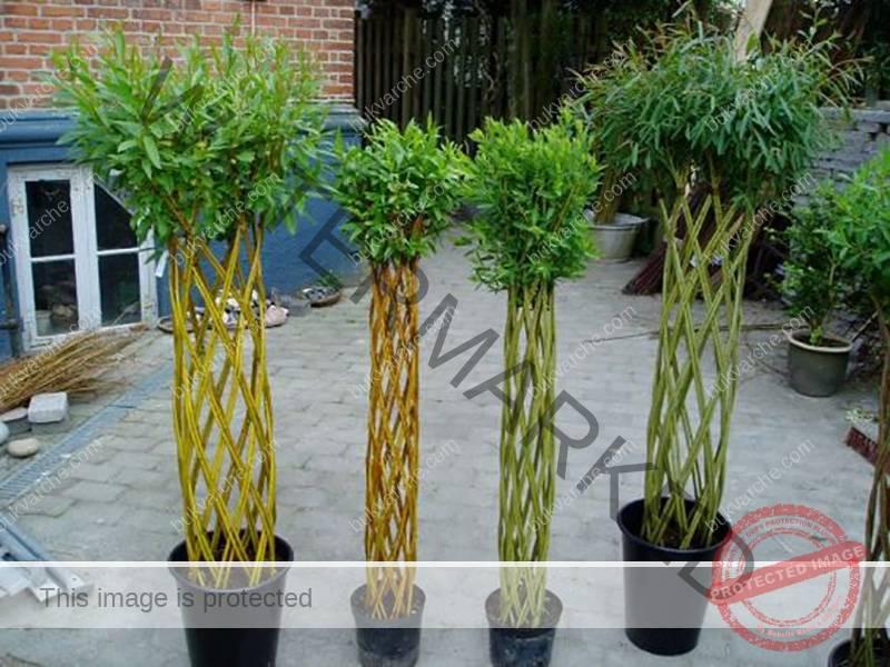 Съседът нарязал пръчки от върба и изчакал да се вкоренят, а след това започнал да твори… Това е най-доброто решение за градината ви!