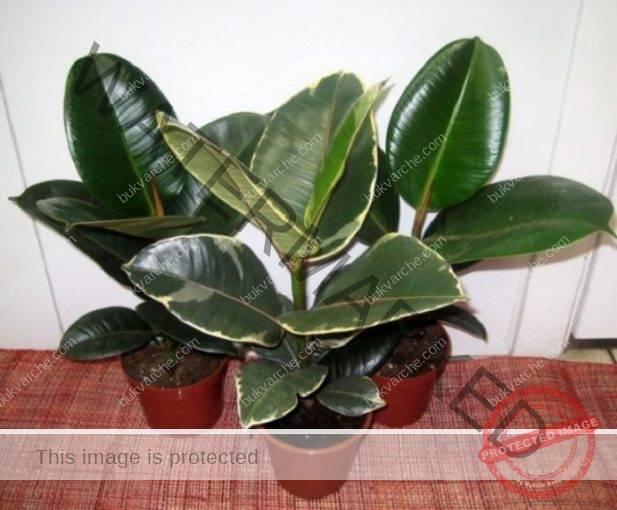 Тези растения са кислородна бомба! Най-малко едно от тях трябва да бъде в дома ви!