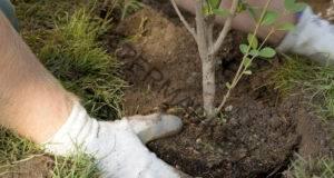 Полезни съвети за засаждането на растения през септември