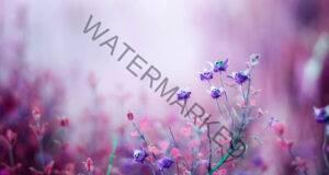 Цветята и вашата душевност! Научете повече за себе си сега!