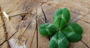 Тези 8 знака показват, че много скоро късметът ще почука на вратата ви!