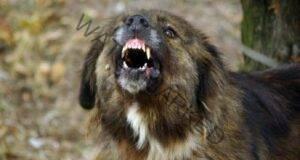 Нападение от кучета: 7 техники как да се предпазите