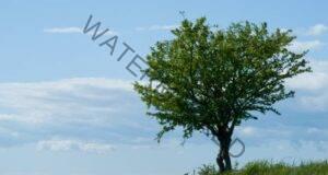 Тест: Изберете дърво и узнайте думата, която ви характеризира!