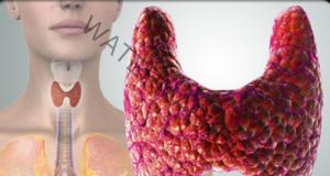 Щитовидната жлеза - как да я възстановим и защитим ефикасно!