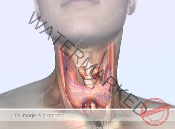 6 храни, които да избягвате при проблеми с щитовидната жлеза
