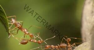 7 метода за справяне с мравките у дома! Прочетете тук!