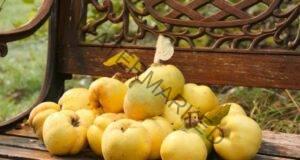 Дюля: Полезни свойства и витаминозна рецепта