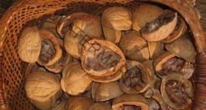 Настойка от орехови черупки. Средство, което ще ви помогне
