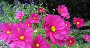 Това е Цветето, което ще разкрие дали вашето желание ще се сбъдне!