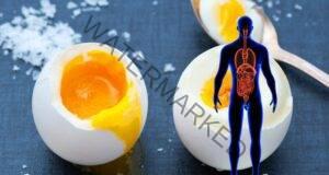 Яйцата и цялата истина за тяхната полза за организма ни!