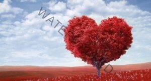 Гадене за любовта: Изберете символ и прочетете какво ви очаква!