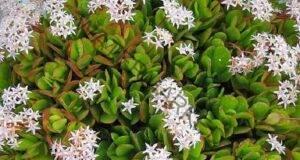 Десетте стайни растения, които са най-лесни за отглеждане