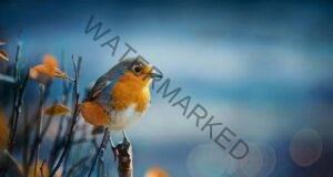 Коя е птицата, която ще изберете Вижте какво послание ви носи!