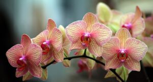 Орхидеята може да бъде опасна за вас! Разберете в кои случаи!