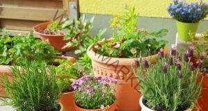 Подхранете стайните растения по 9 ефективни начина!