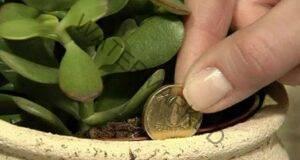 Привлечете пари в дома си, като се сдобиете с тези растения!