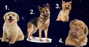 Разберете кой мъж е идеален за вас, като изберете куче!