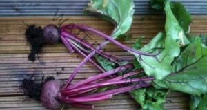 Този зеленчук ще ви помогне да премахнете всички токсини!