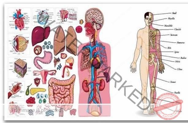 Ето какво ни казва болката в определени органи